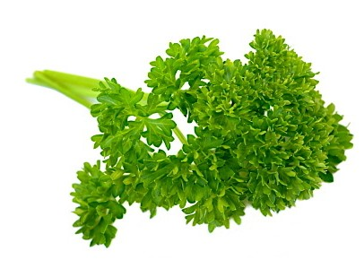 Health Benefits Of Parsley - curly leaf