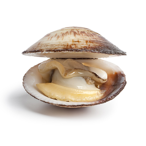 Clams Nutrition Facts: Build Muscle and Look Younger
