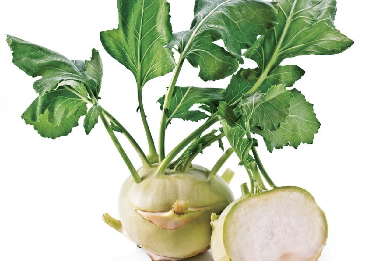 Kohlrabi Nutrition - Green kohlrabi