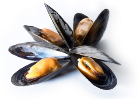 Mussels Nutrition