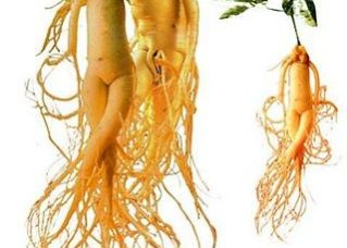 Ginseng Nutrition